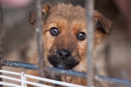 perro triste: Cachorro encerrado en la jaula