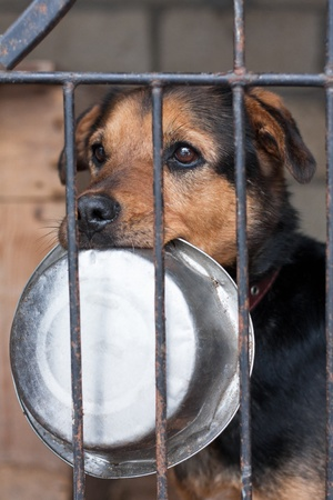sad dog: Hungry dog with bowl locked in the cage