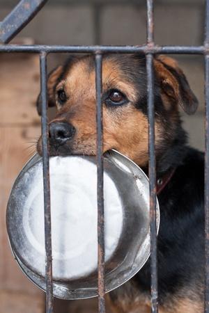 perro triste: Perro hambriento con bowl encerrado en la jaula