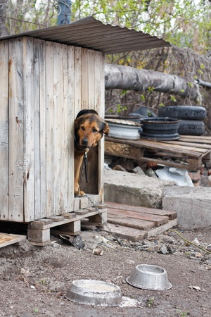 Lonely dog watching out of his kennel photo