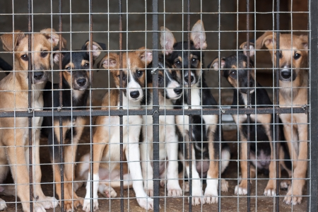 shelter: Many cute puppies locked in the cage