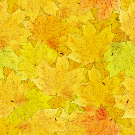 nov: Fall yellow leaves seamless background - texture pattern for continuous replicate Stock Photo