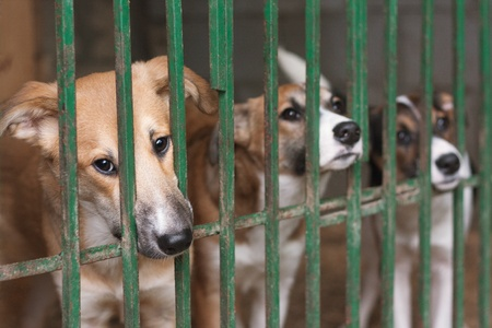 dog kennel: Three cute puppies locked in the cage Stock Photo