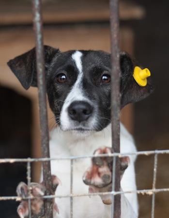 mirada triste: Cachorro con etiqueta en la oreja encerrado en la jaula Foto de archivo
