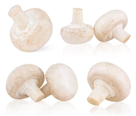 agaricus: Set of fresh mushroom champignons isolated on white background