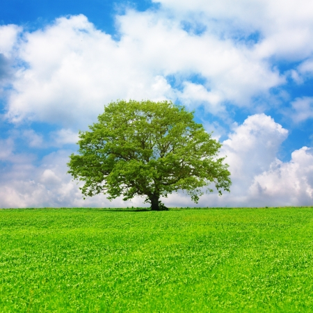 Single tree in a green field and cloudy blue sky photo