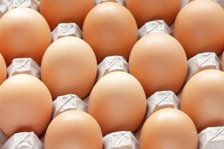 Closeup of many fresh brown eggs in carton tray photo