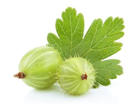 Closeup di uva spina verde con foglia isolato su bianco