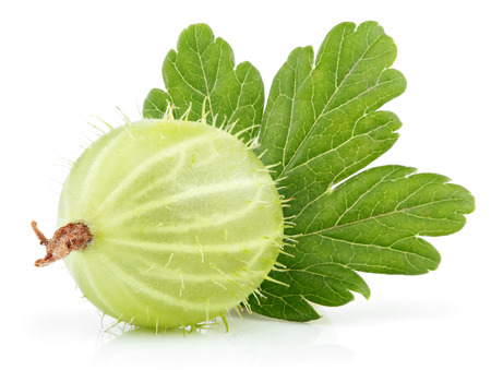 pulpy: Closeup of green gooseberry with leaf isolated on white