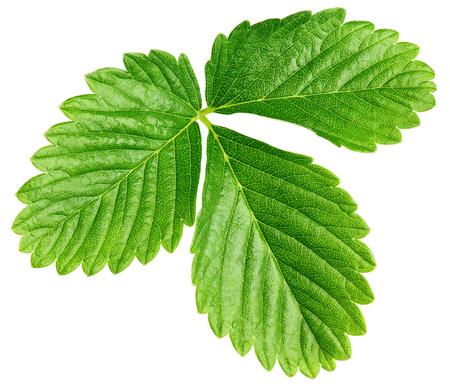 Single green strawberry leaf isolated on white Archivio Fotografico