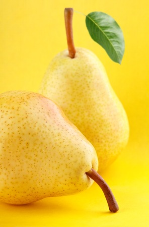 yellow stem: Group of ripe yellow pear fruits with green pear leaf on yellow background