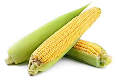 Ears of corn (Corncob) isolated on white background. Full depth of field. 写真素材