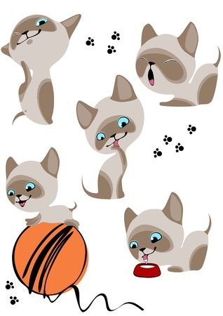 The complete set of cheerful Siamese kittens 2. Similar in a portfolio Vector