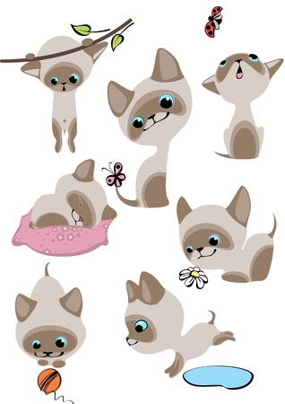 The complete set of cheerful Siamese kittens. Similar in a portfolio Vector