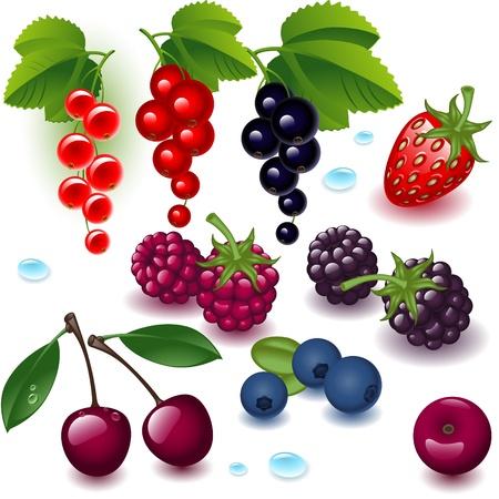 frutos rojos: Baya conjunto completo sobre un fondo blanco