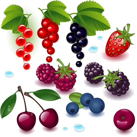 black currants: complete set berry on a white background Illustration