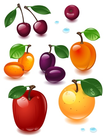 complete set fruit on a white background Vector