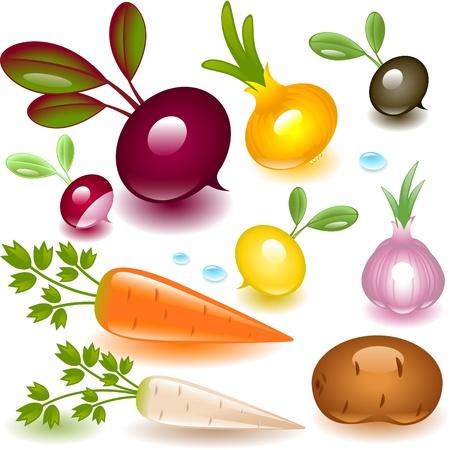 cebollas: vegetales conjunto completo sobre un fondo blanco. ra�z. Vectores