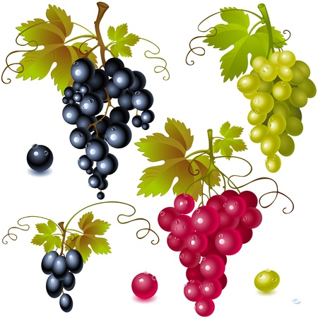 grapes on vine: different varieties of grapes with leaves on white background