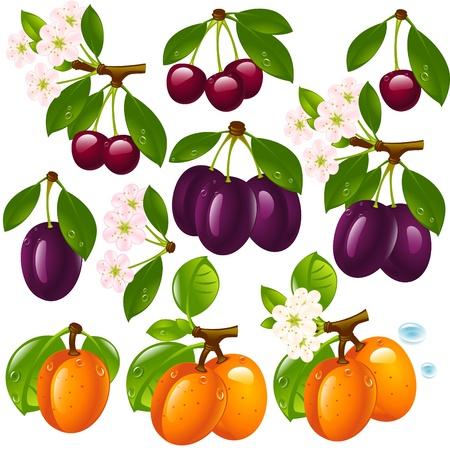 ciruela: conjunto de diferentes frutas aislado en un fondo blanco