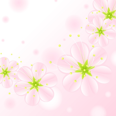set of pink blossoms on a white background Vector