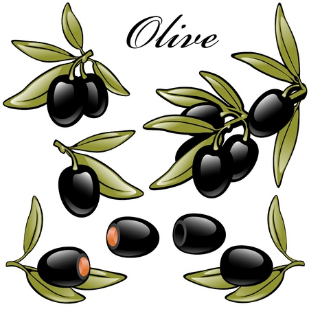 pitted: isolated set of black olives. with stones, pitted, stuffed and on a branch. Illustration