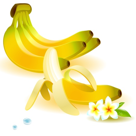 set of bananas, on a branch and purified,  with a tropical flower