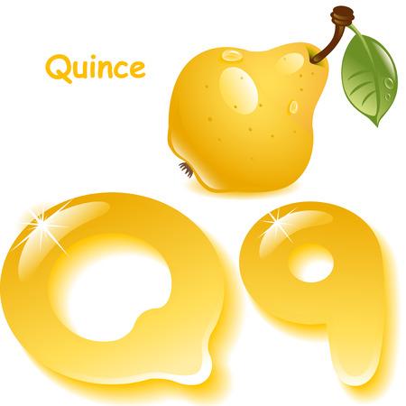membrillo: Alfabeto. Inglés capital y letra mayúscula Q, color estilizada de jugo de membrillo. membrillo amarillo con hojas. ilustración vectorial
