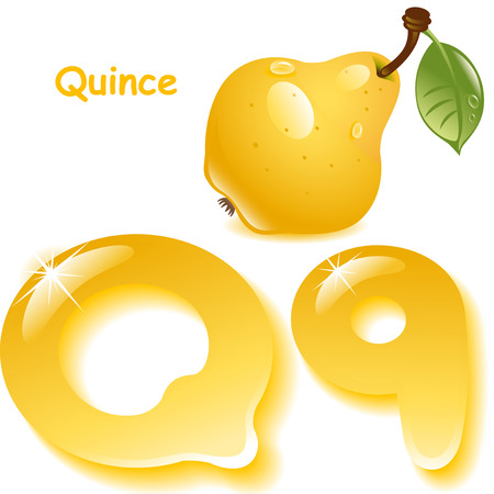 quince: Alphabet. English capital and uppercase letter Q, stylized color of quince juice. yellow quince with leaf. vector illustration