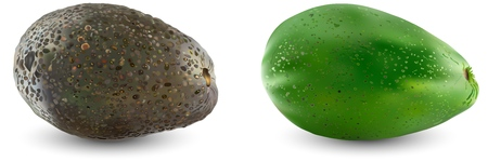Collection of two types of avocado. Set of ripe realistic avocado fruits. Vector illustration ..Isolation on a white background. 向量圖像