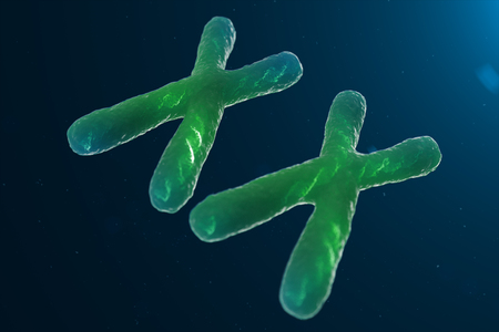 Infection of XX-Chromosomes DNA, virus or infection penetrates the body. Female chromosomes. Chromosomes with DNA carrying the genetic code. Changing the genetic code at the biological level. 3D illustration