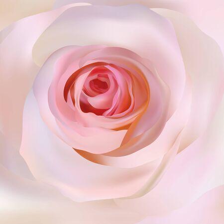 Delicate beige rose close up. 3d realistic rose. Beautiful rose. Romantic background. Vector illustration.
