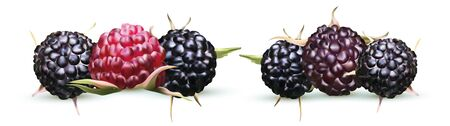 Vector illustration of blackberry isolated on white background. Collection ripe black raspberry. Summers, fresh berry close up. 3D realistic illustration