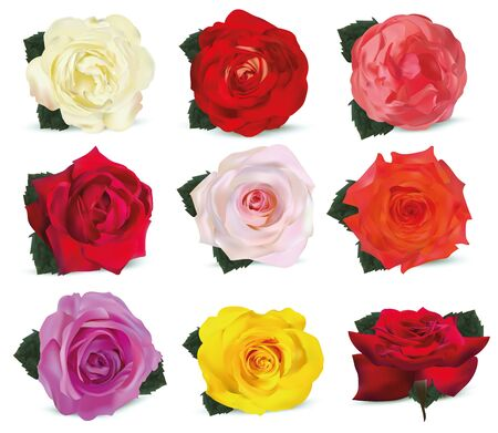 3D realistic roses isolated on white background. Set rose white, orange-yellow, pink, red, beige, orange, purple, yellow with green leaf. Flower close up. Vector illustration. Summer flower