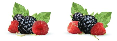3D realistic Blackberry and raspberry isolated on white background. Set fresh, summer berry with green leaft. Black and red raspberry. Vector illustration. Banco de Imagens