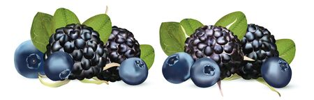 3D realistic Blackberry and Blueberry isolated on white background. Set fresh, summer berry with green leaft. Black raspberry and blueberry close up. Vector illustration.