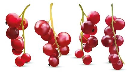 Collection red currant berry on white background. 3d realistic berries close up. Vector illustration.