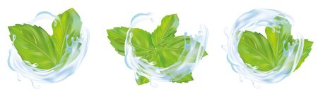 3d realistic mint leaves with splash water. Collection of fresh mint and splash water isolated on white background. Icons. Vector illustration