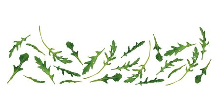 Beautiful fresh rucola isolated on white background. Salad or rucola. 3D realistic arugula with copy space for you text. Banner. Vector illustration.