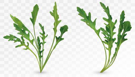 Fresh leaf arugula. Rocket salad isolated on transparent background. Green leaf arugula. 3D realistic salad or rucola. Vector illustration