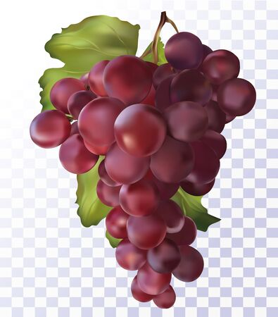 Fresh red grapes on transparent background. 3D realistic grapes.Wine red grapes. Food concept. Vector illustration. 일러스트