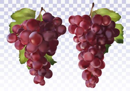 Icon set red grapes. Fresh red grapes on transparent background. Table grapes. 3D realistic grapes. Wine grapes. Vector illustration.