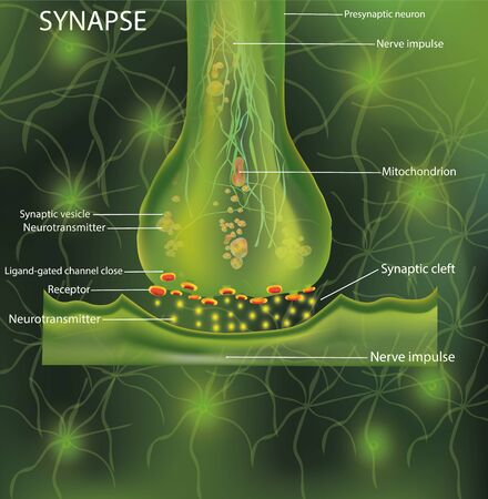 Neurons, scientific designation. Structure Synapse. Neuronal with a nerve cell. Signaling in the brain. Transmission of impulses in a living organism. Vector illustration Stock Illustratie