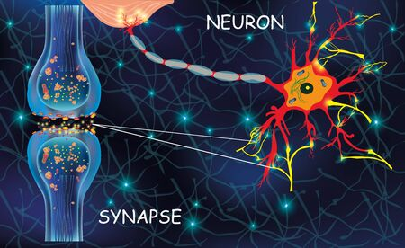 Anatomy neyron cells. Transmission signal of impulse in a living organism. Signaling in the brain. Neural connections in the brain form thoughts, concept learning. Structure neyron for educational, medical, biological use. Synapse electronic pulses. Vector illustration