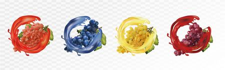 Set wine grapes. Table grapes white,red,dark blue with splash. Grapes on transparent background. Fruit and splashes. Vector illustration 스톡 콘텐츠