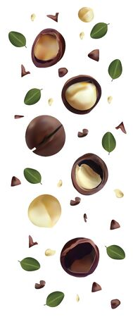 Nuts macadamia isolated on white background. Nuts shelled and unshelled with green leaf. Tasty macadamia nuts. Organic macadamia. Vector illustration. 일러스트