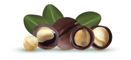 Noix de macadamia isolé sur fond blanc. Noix décortiquées et non décortiquées avec des feuilles vertes. Noix de macadamia savoureuses. Macadamia biologique. Illustration vectorielle. Vecteurs