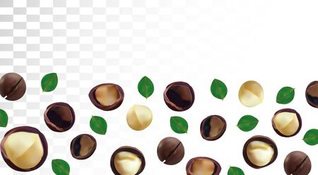 3D realistic macadamia nut isolated on transparent background. Shelled and unshelled Macadamia nuts with green leaf. Organic macadamia. Beautiful illustration. Banco de Imagens