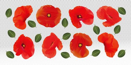 Red flowers poppies with green leaf. Different red poppies on transparent background. Realistic beautiful flower. 3d Vector illustration Stock Illustratie