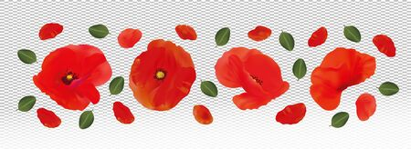 3D realistic red poppies isolated on transparent background. Delicate flower red poppies. Flower close up. Wild red poppies. Vector illustration.
